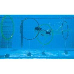 Gewichten voor duiktouw